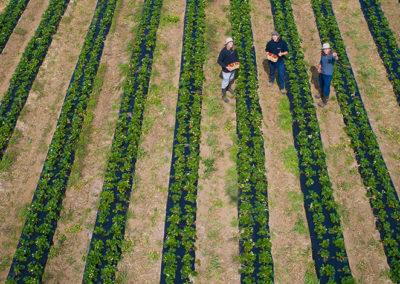 Développement agroalimentaire